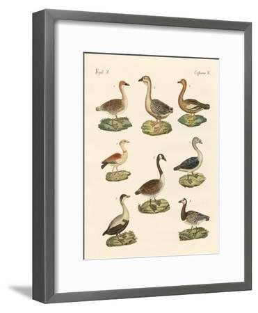 Various Kinds of Geese--Framed Giclee Print