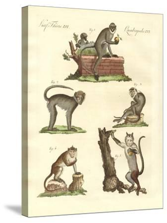 Some Kinds of Monkeys--Stretched Canvas Print