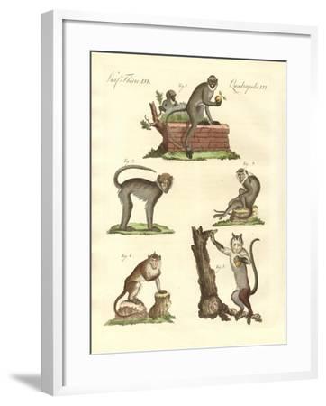 Some Kinds of Monkeys--Framed Giclee Print