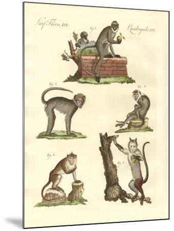 Some Kinds of Monkeys--Mounted Giclee Print
