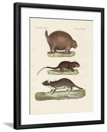 Strange Spiny Animals--Framed Giclee Print