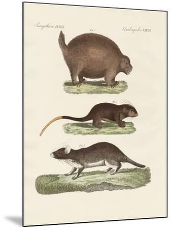 Strange Spiny Animals--Mounted Giclee Print