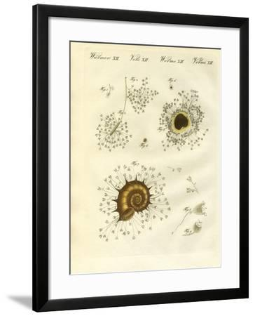 The Cup-Shaped Polyps--Framed Giclee Print