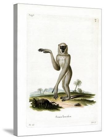 Javan Silvery Gibbon--Stretched Canvas Print