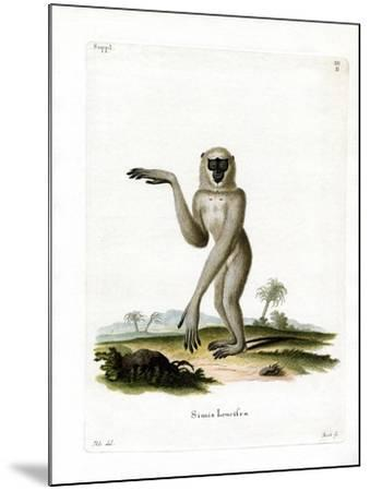 Javan Silvery Gibbon--Mounted Giclee Print