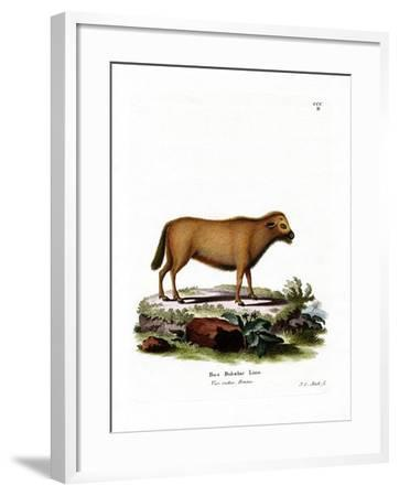 Indian Water Buffalo--Framed Giclee Print