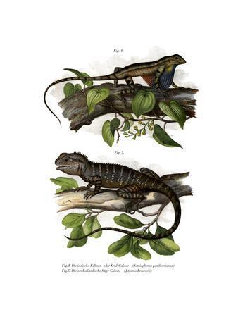 Fan-Throated Lizard--Framed Giclee Print