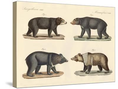 Several Bears Found--Stretched Canvas Print