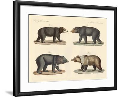 Several Bears Found--Framed Giclee Print