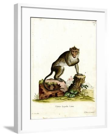 Crab-Eating Macaque--Framed Giclee Print