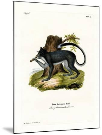 Crab-Eating Macaque--Mounted Giclee Print