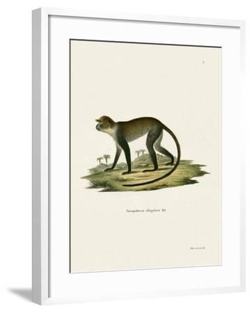 White-Throated Monkey--Framed Giclee Print