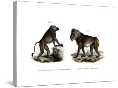 African Baboon, 1860--Stretched Canvas Print