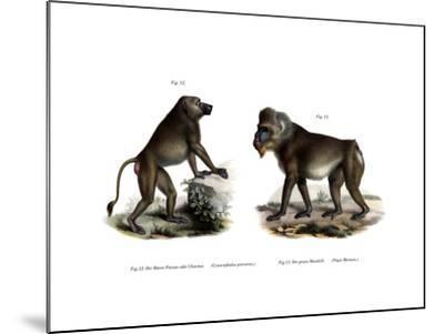 African Baboon, 1860--Mounted Giclee Print