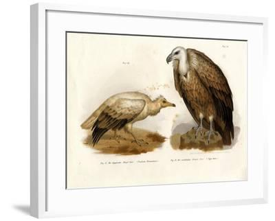 Egyptian Vulture, 1864--Framed Giclee Print