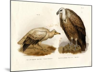 Egyptian Vulture, 1864--Mounted Giclee Print