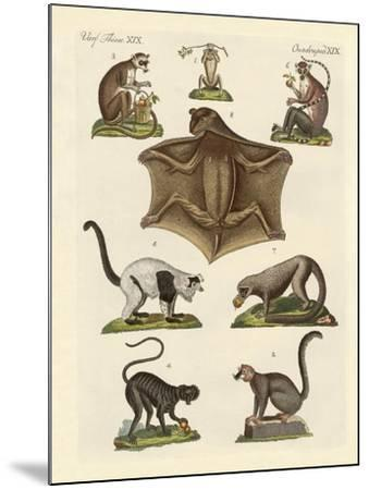 Eight Kinds of Lemurs--Mounted Giclee Print