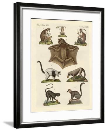 Eight Kinds of Lemurs--Framed Giclee Print