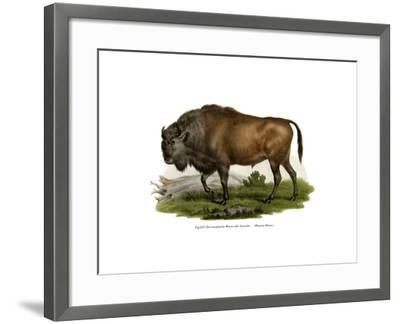 European Bison, 1860--Framed Giclee Print