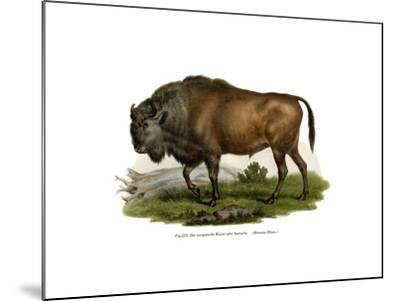 European Bison, 1860--Mounted Giclee Print