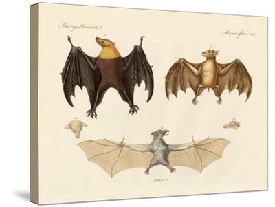 Strange Flap Animals--Stretched Canvas Print