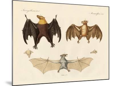 Strange Flap Animals--Mounted Giclee Print