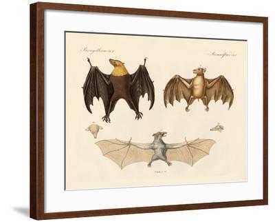 Strange Flap Animals--Framed Giclee Print