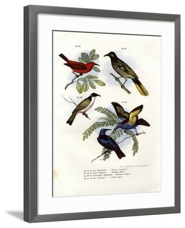 Scarlet Myzomela, 1864--Framed Giclee Print