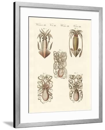 Molluscs or Soft Worms--Framed Giclee Print