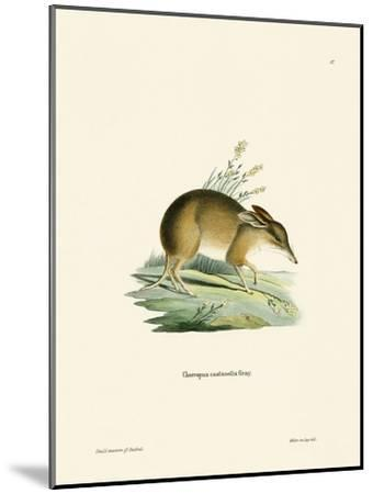 Pig-Footed Bandicoot--Mounted Giclee Print