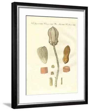 Strange Fossilizations--Framed Giclee Print