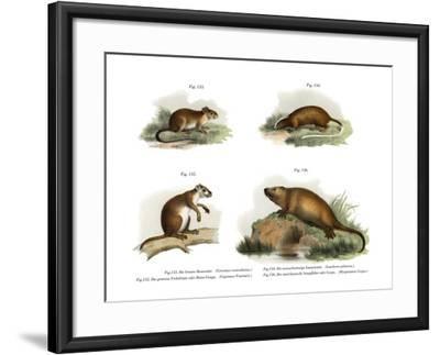 Atlantic Tree Rat, 1860--Framed Giclee Print