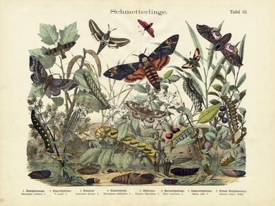 Butterflies, C.1860--Premium Giclee Print
