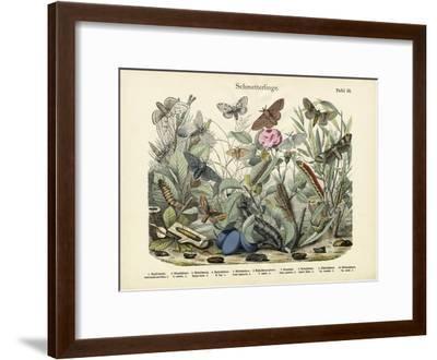 Butterflies, C.1860--Framed Giclee Print