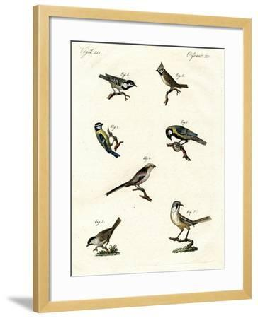 Different Kinds of Tits--Framed Giclee Print