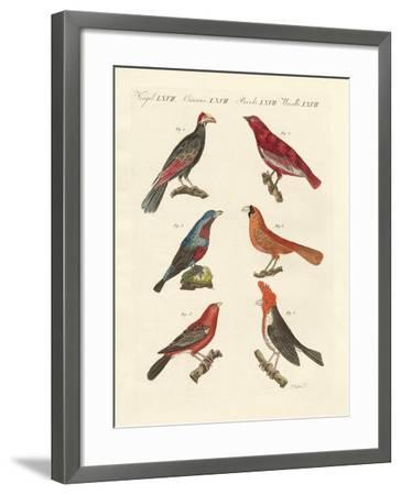 Foreign Beautiful Birds--Framed Giclee Print