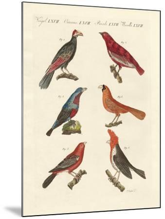 Foreign Beautiful Birds--Mounted Giclee Print