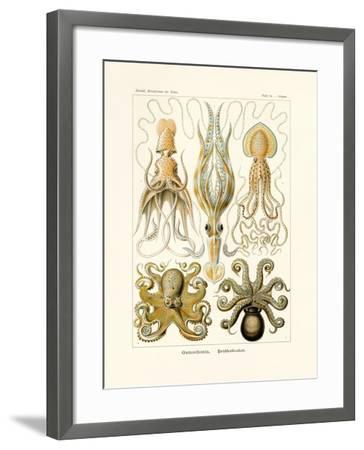 Gamochonia, 1899-1904--Framed Giclee Print