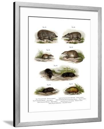 Euroean Hedgehog, 1860--Framed Giclee Print
