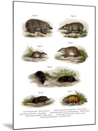 Euroean Hedgehog, 1860--Mounted Giclee Print