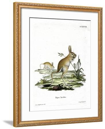 Lesser Egyptian Jerboa--Framed Giclee Print
