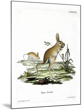 Lesser Egyptian Jerboa--Mounted Giclee Print