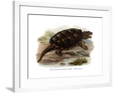 Common Snapping Turtle--Framed Giclee Print