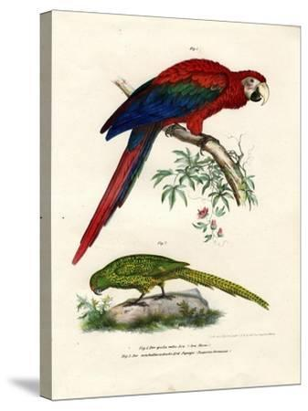 The Scarlet Macaw, 1864--Stretched Canvas Print