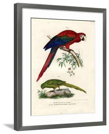 The Scarlet Macaw, 1864--Framed Giclee Print