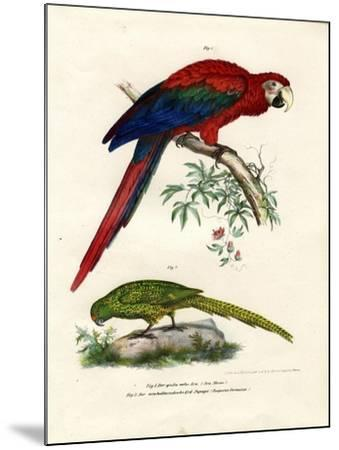 The Scarlet Macaw, 1864--Mounted Giclee Print