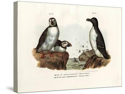 Artic Puffin, 1864--Stretched Canvas Print