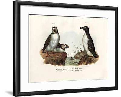 Artic Puffin, 1864--Framed Giclee Print