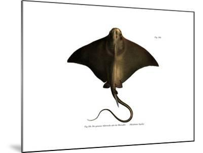 Common Eagle Ray--Mounted Giclee Print