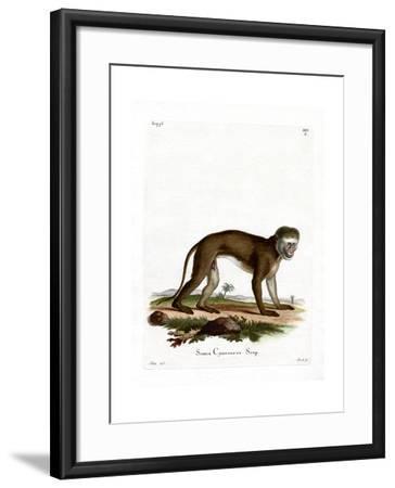 Malbrouck Monkey--Framed Giclee Print